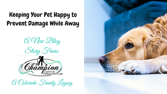 Keeping Your Pet Happy to Prevent Damage While Away