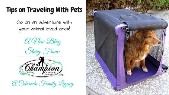 Tips on Traveling with Pets