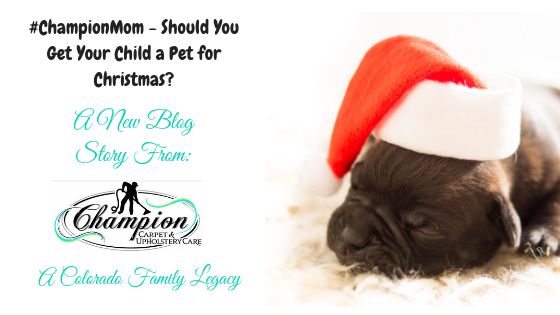 #ChampionMom - Should You Get Your Child a Pet for Christmas?